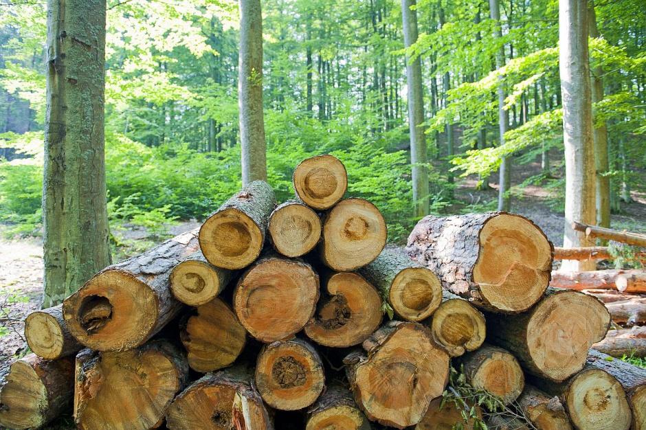 PIE: światowe i europejskie indeksy cen drewna najwyższe od lat