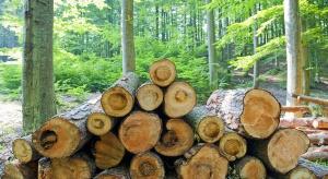 Podkarpackie: 19 firm wzięło udział w przetargu na zakup drewna