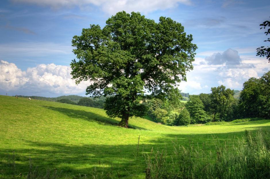 Warmia i Mazury: Kryzys na rynku sprzedaży ziemi