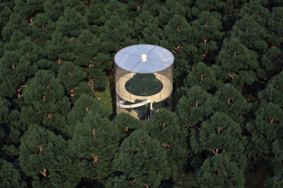 Dom, w którym rośnie drzewo