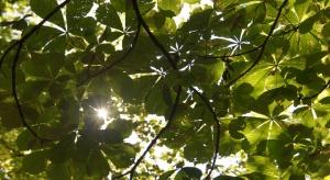 W Szczecinie powstaną kolejne zielone podwórka