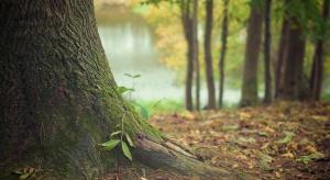 Grunty leśne na nowych zasadach