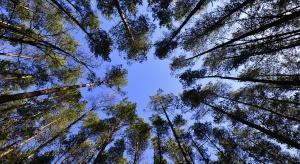Ostrów Wlkp: ruszyła akcja sadzenia drzew