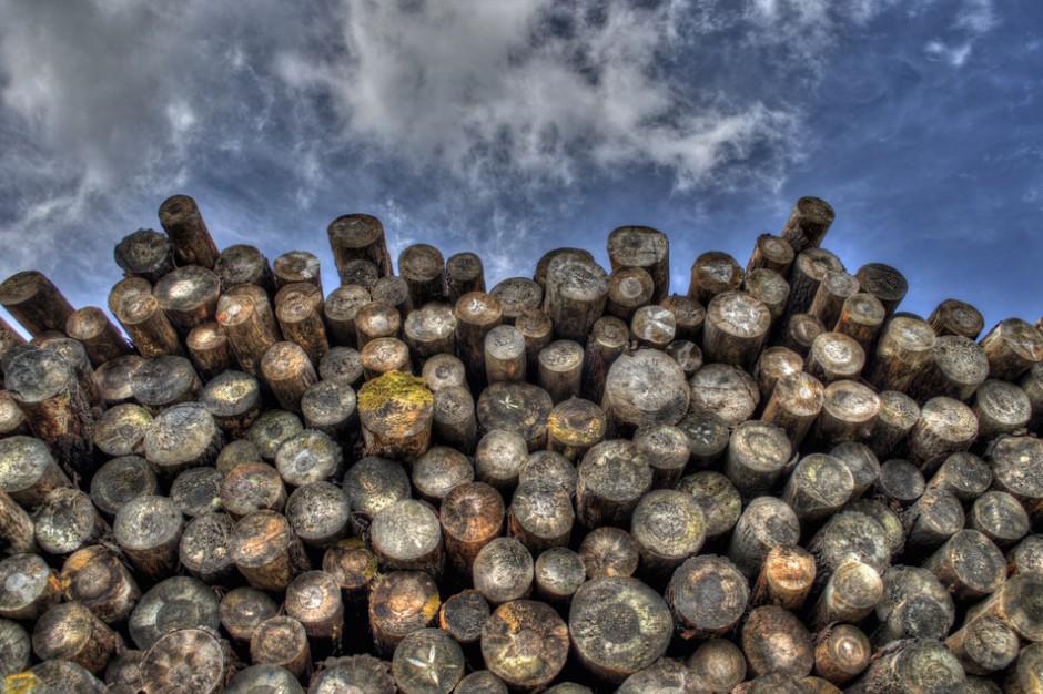 Wiceszef MKiŚ: popyt na drewno będzie rósł o 30 proc. rocznie