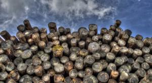 Holandia: wysokie ceny gazu, mieszkańcy kupują coraz więcej drewna na opał