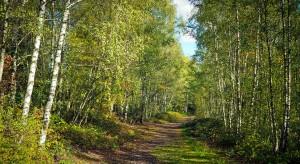Lasy Państwowe zabrały się za budowlankę. Powstają domy z drewna