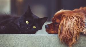Domowe assistance to nie jest martwy zapis. Można liczyć na wsparcie hydraulika lub... opiekę nad domowym zwierzakiem