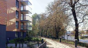 Przeniesiono drzewa na terenie budowy Aroma Park
