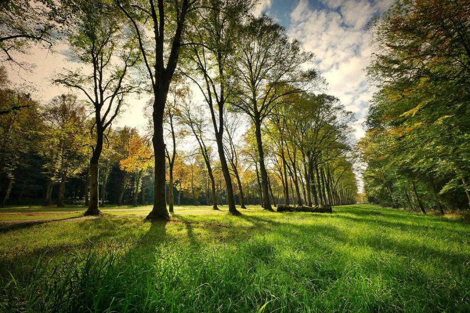 Park Wełnowiecki w Katowicach zyska nowe oblicze