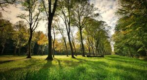 W Rudzie Śląskiej odnowione zostaną dwa parki w dzielnicy Nowy Bytom