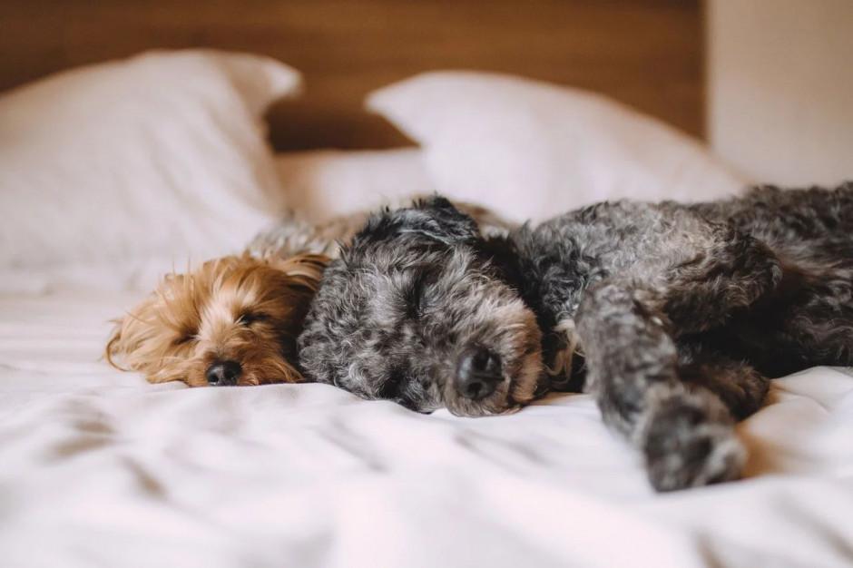 GIW: koronawirus, a postępowanie ze zwierzętami domowymi i gospodarskimi