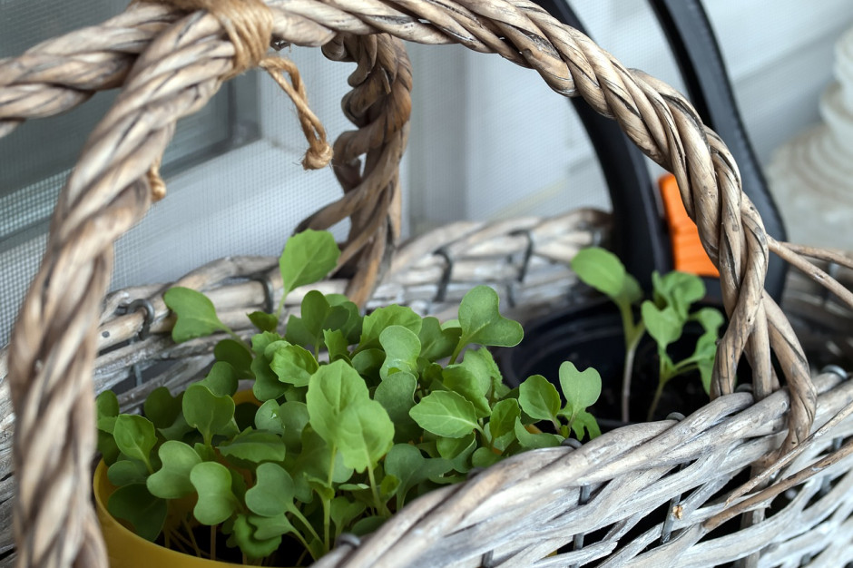 Jak założyć ogródek warzywny na balkonie?