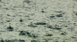 Ruda Śląska: miasto dbając o zieleń i deszczówkę chroni zasoby wodne