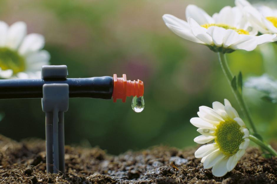 Jak oszczędzać wodę w ogrodzie?