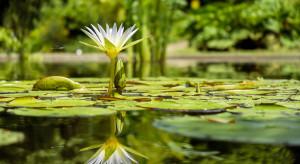 Poznań: pływające ogrody w parku Wilsona