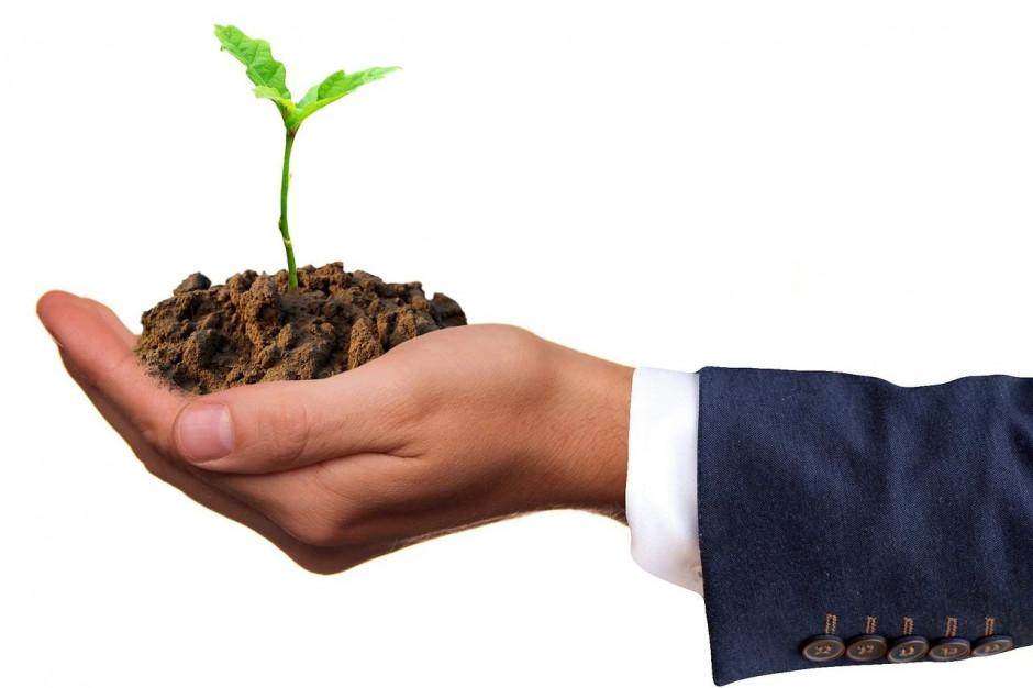 Śląskie: ekolodzy rozdadzą sadzonki drzew i kwiatów za surowce wtórne
