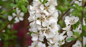 Ogród na wiosnę. Owoce z własnej grządki