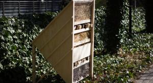 Deweloperzy zbudowali największy na świecie domek dla owadów. Jego elementy staną na polskich osiedlach