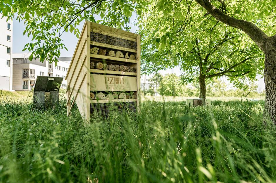 Branża buduje domki dla owadów. Polscy deweloperzy z rekordem Guinnessa